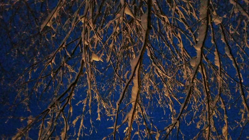 Crepuscular portrait of Jonas. Snow Storm Branches Sky Lookingup Dusk Showing Imperfection