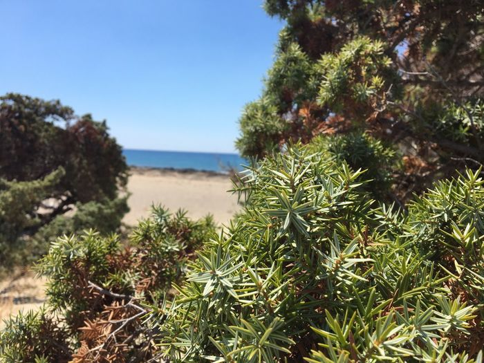 Sea Nature Growth Plant Tree Day Scenics Tranquility Outdoors Beauty In Nature No People Tranquil Scene Clear Sky Water Beach Sky Close-up Focus On Foreground Freshness Sand Beauty In Nature Sunlight Green Color Tree Blue