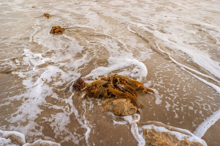 Seaweed Washed Ashore High Angle View No People Outdoors Water Nature Sand Stone Rock - Object Waves Sea Ocean Beachphotography Day Beach