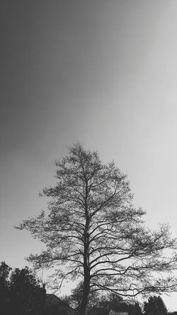 Sunny days. Tree Branch No People Nature Sky Silhouette Gray Background Treetop Beauty In Nature Outdoors Day Garden Manchester Sunny Black And White Photography Landscape Samsung Galaxy S6 VSCO Dramatic Sky Minimalism Less Is More Simplicity Simplistic