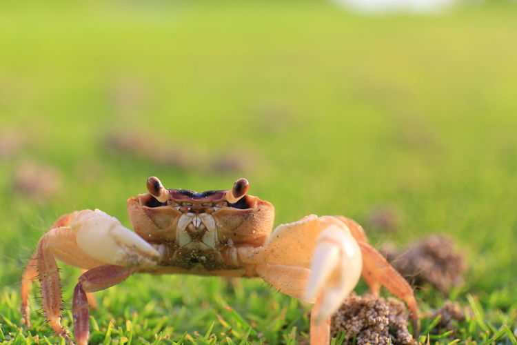 Close-up of crab on grass