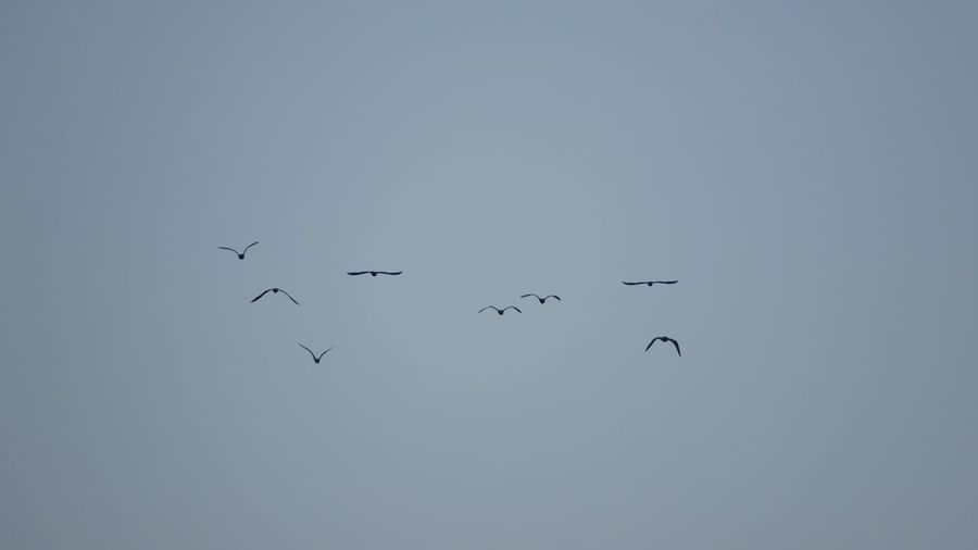 Flying Group Of