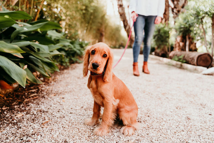 Portrait of dog with woman on footpath at park