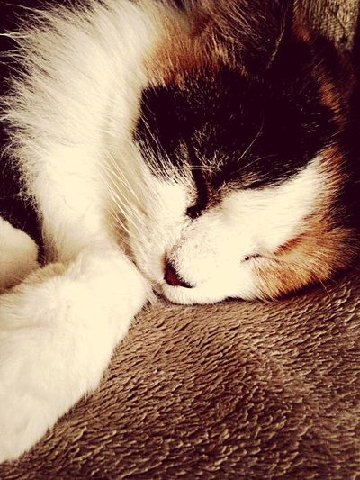 Gizmo ?❤️? Love Furbaby Cat Playing With The Animals Cat♡ Photography I Love My Cat Cute Pets Sleeping My Guard Cat