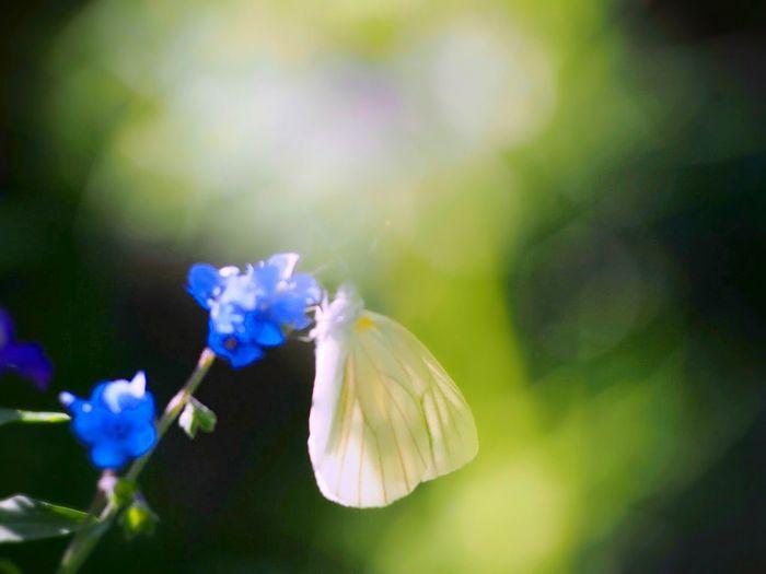 たまには夢を見ない夜を… 蝶々 Butterfly Collection Butterfly - Insect Insect Collection EyeEm Nature Lover EyeEm Best Shots Eyemphotography EyeEm Gallery My Point Of View EyeEm Best Shots - Nature