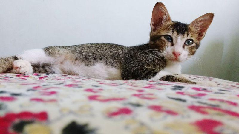 Pets Animal Themes Domestic Animals Feline