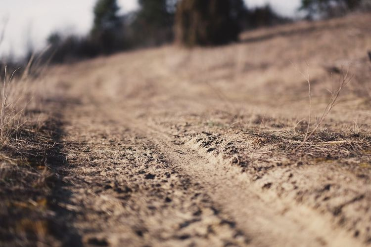 Travel Car Trace Sand Selective Focus Land Nature Field No People Day Plant Landscape Surface Level Dirt Road Grass Environment Tree Transportation Direction Tranquility Outdoors Close-up The Way Forward The Great Outdoors - 2018 EyeEm Awards