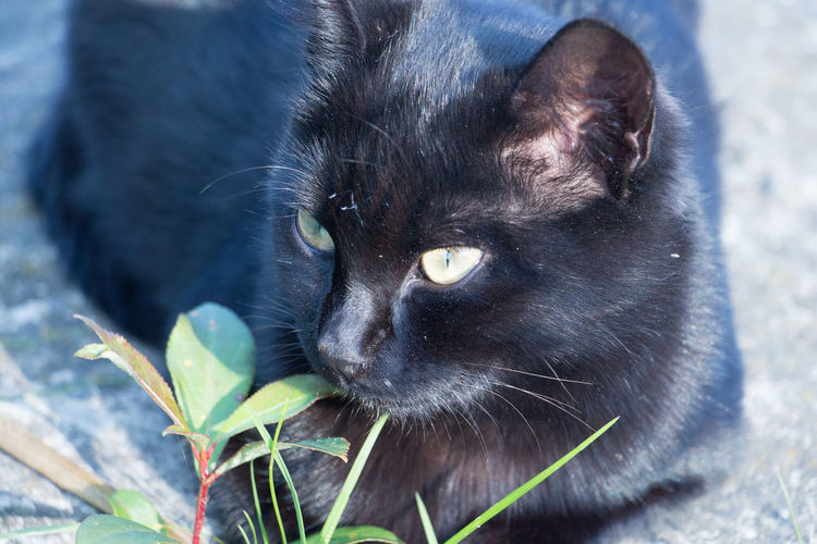 Black Cat Is A Superstition... Black Color Portrait Cats Of EyeEm Cat Lovers Animal Themes One Animal Animal Mammal Close-up Outdoors Black Cat Photography Black Cat Collection The Week On EyeEm Best EyeEm Shot