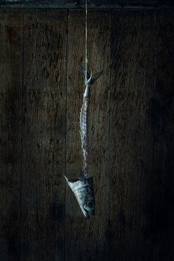 Close-up of dead fish hanging on metal against wall