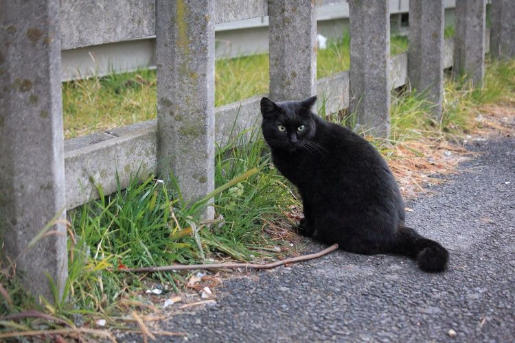 This Black Cat Is Pretty.⑸