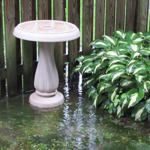 Rainy day 🌧 Bird Bath Plant Green Color Nature Day Wood - Material Front Or Back Yard Water Outdoors Reflection