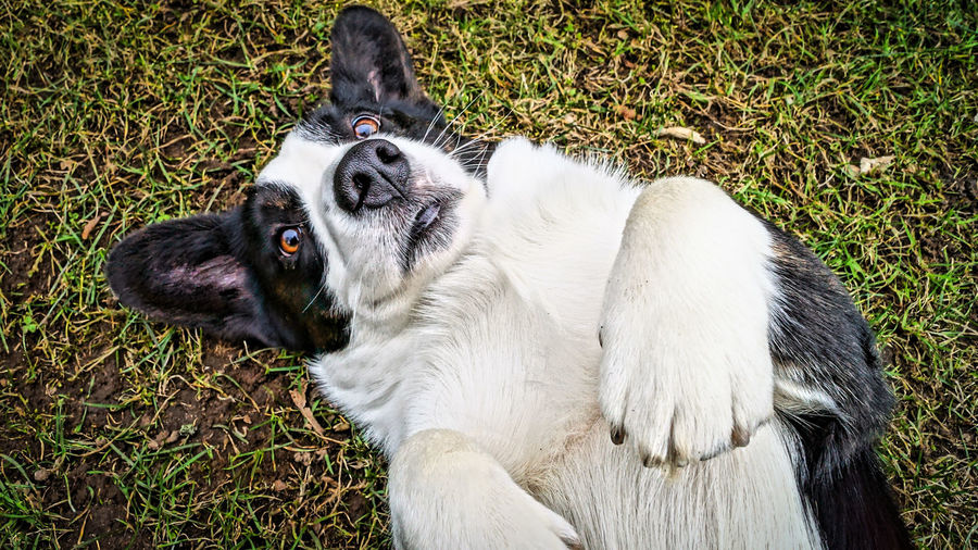 Oooh, please, scratch my belly :-) To all my Eyeemfriends, have a fantastic day. Dog Enjoying Life Hello World Corgi Grass Humans Best Friend