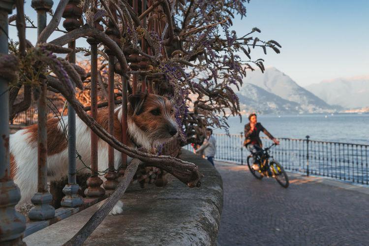 People riding bicycle with dog on bridge