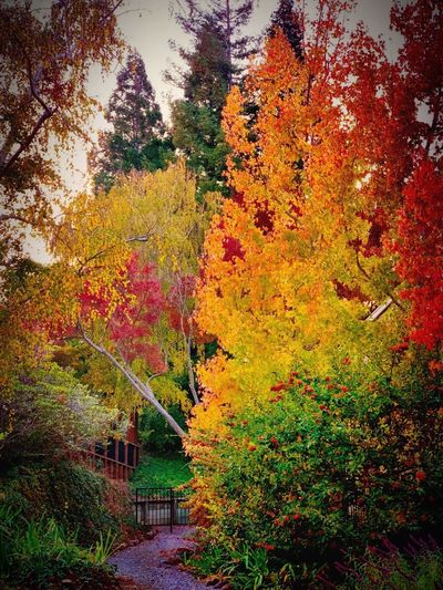 """Hidden Gate"" A secluded gravel path in a suburban development leads to a hidden gate that opens to a magical trail along a garden creek. Fall Colors Fall Beauty Fall Autumn colors Suburban Exploration Secret Path Hidden Gate Tree Growth No People Nature Beauty In Nature Multi Colored Autumn Orange Color Tranquility"