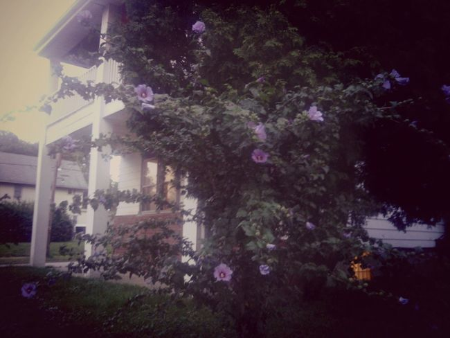 Home Sweet Home Flowerpower I<3 Photography Dusk