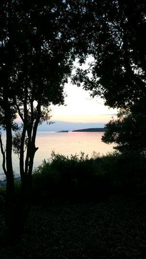 Près De Gry Tree Water Sea Beach Silhouette Sunset Reflection Sky Horizon Over Water Landscape Idyllic Groyne Coast Calm Remote
