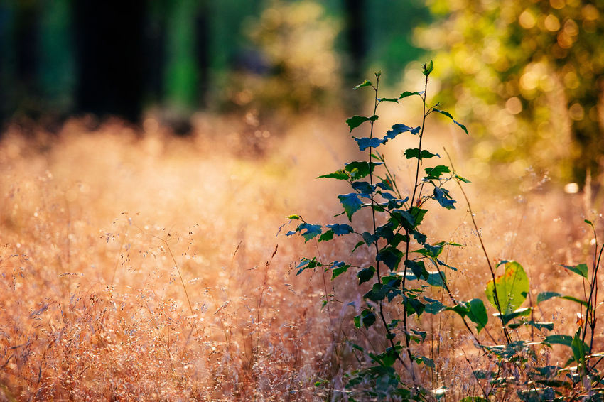 Tadaa Community Beauty In Nature Close-up Day Field Flower Flower Head Flowering Plant Focus On Foreground Forest Fragility Freshness Green Color Growth Land Leaf Nature No People Outdoors Plant Selective Focus Sunlight Sunset