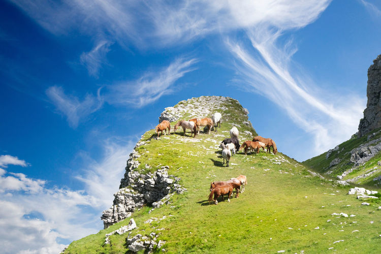 Horses grazing on the heights of the gran sasso d'italia abruzzo