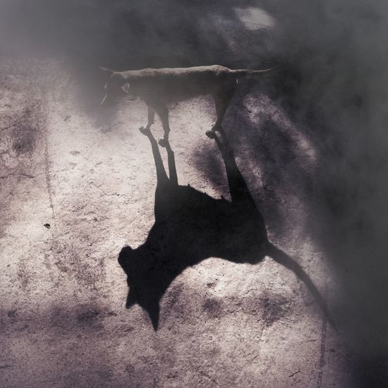 Dog Shadowdog Shadow Bw Monotone Monochrome monochrome photography Mobilephotography Nokia5 Shadow Water Close-up Spooky Bat - Animal Horror Witch Evil Ghost Zombie Halloween
