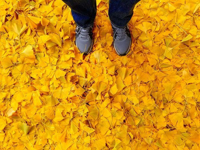 Ginkgo Leaves Ginkgo Ginkgo Leaf Yellow Yellow Leaves Ginkgo Leaves Leaves Leaf Feet Canon Canonphotography Top View EyeEmNewHere