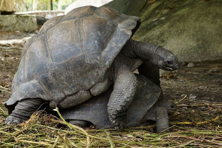 Trip ToSeychelles Seychelles Indianocean make love ... Not war .... 😉