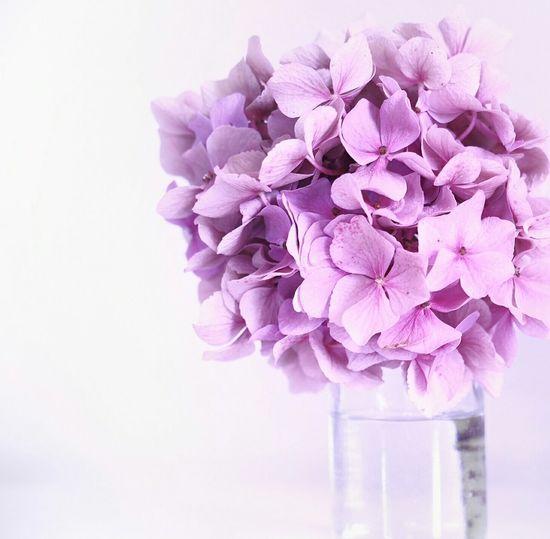 Flowers Flowers In My Garden Just White Hydrangea Getting Inspired Macro Market Bestsellers June 2016 Bestsellers