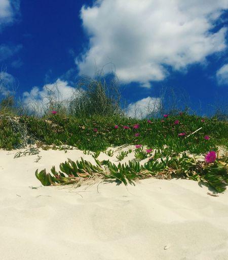 Beach Sabbia Nuvole Cielo Torrelapillo