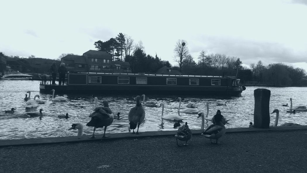 Blue Grey Watching Canal Boat Ducks Swans Geese River Thames EyeEm Nature Lover EyeEm Gallery