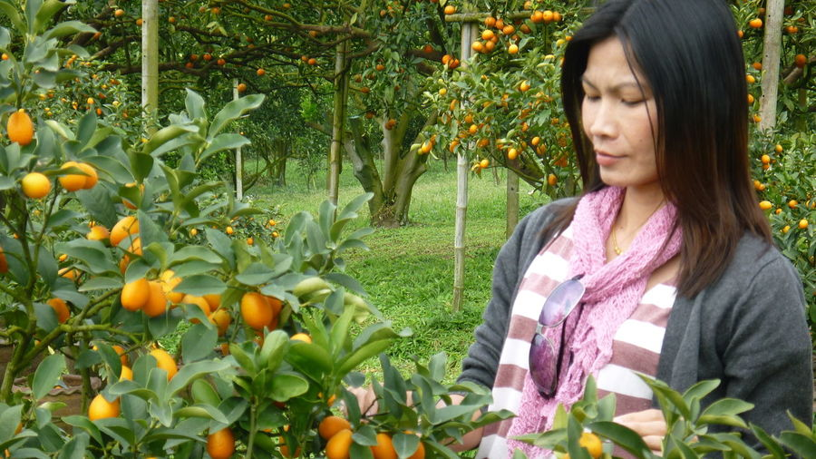 Mature woman standing by oranges on tree