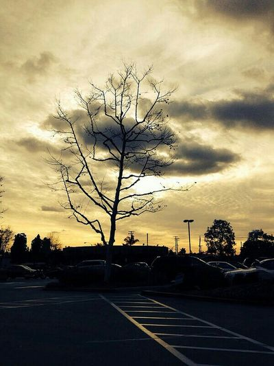 EyeEm Best Shots Tree Sillouette Sunset Silhouettes Sunset_collection Sunsetporn The Great Outdoors - 2015 EyeEm Awards Light And Shadow