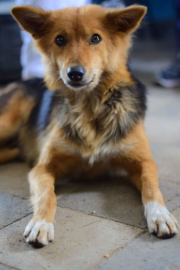 I met her and she looked like she was a modelling dog, posing for the pic. Dogs Dogs Of EyeEm Animal Body Part Canine Close-up Dog Dog Love Domestic Domestic Animals Flooring Focus On Foreground Looking At Camera Mammal No People One Animal Pets Portrait Relaxation Sitting Vertebrate