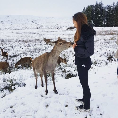 Side View Of Woman With Deer On Snow