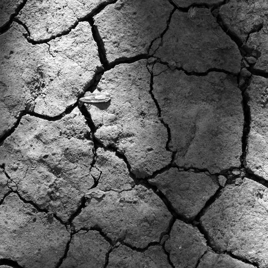 Backgrounds Bark Close-up Cracked Cracked Mud Day Detail Drought Farming Full Frame Global Warming Natural Pattern No People Outdoors Rnvironment Rock Rough Stone Textured  Tree Trunk Water WATER SHORTAGE