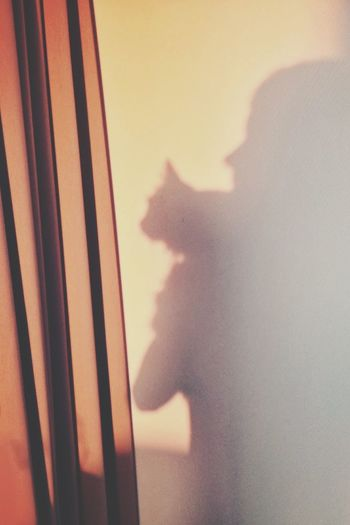 playing shadow