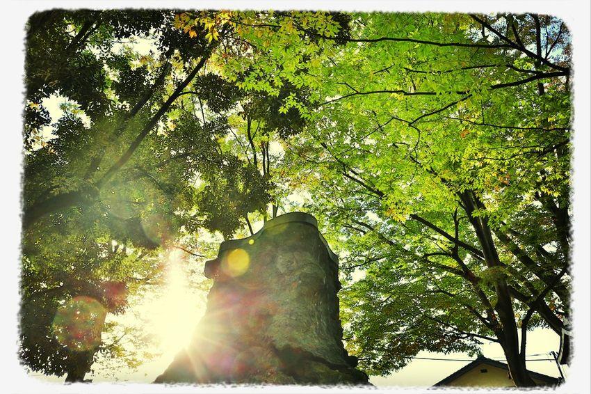 大宮の氷川神社にて 氷川神社