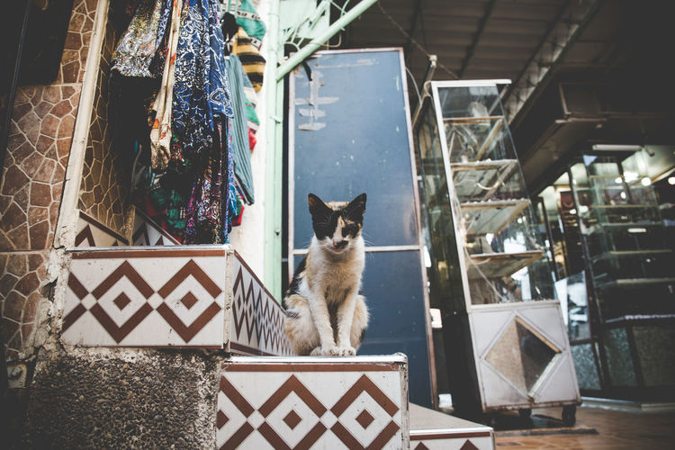 Portrait of cat sitting on step in medina