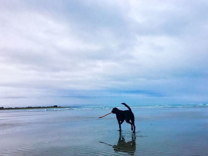 Cloud - Sky Sea Beach Low Tide Beauty In Nature Dog Walking With My Dog