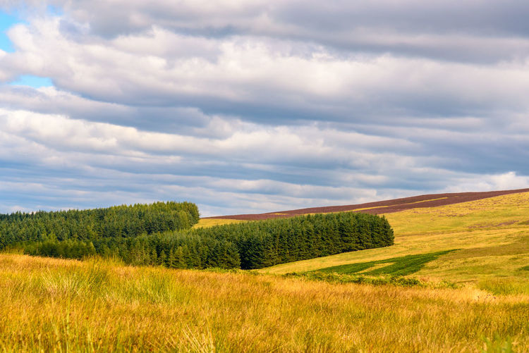 Cairngorms National Park Scotland Beauty In Nature Cloud - Sky Day Field Grass Green Color Growth Landscape Nature No People Outdoors Scenics Sky Tranquil Scene Tranquility Tree