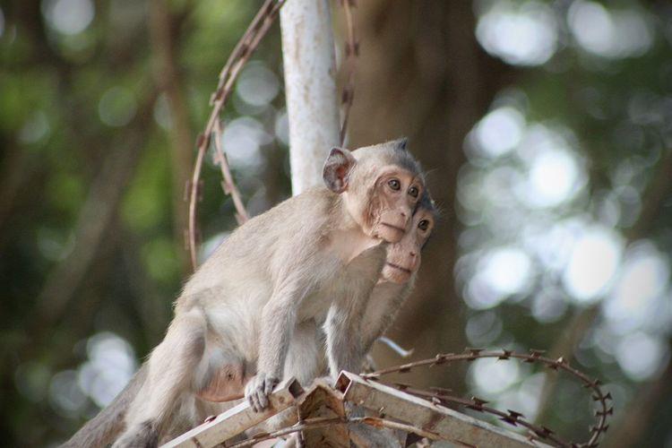 Street monkeys