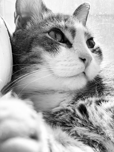 Portrait Headshot Close-up One Person Feline Cat Young Adult Domestic Cat Pets Domestic Animals