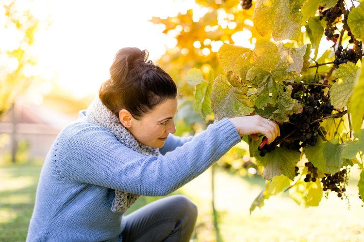 Side view of woman pruning vine in vineyard
