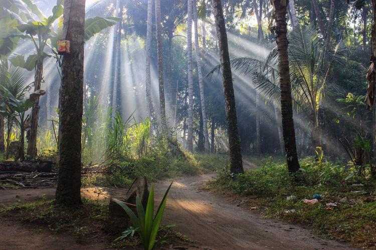 Rays of Light Beauty In Nature Dirt Road Footpath Forest Grass Growth Landscape Lombok Lombok-Indonesia Nature Non-urban Scene Plant Road Scenics Sunbeam Sunlight The Way Forward The Week Of Eyeem The Week On EyeEm The Week On Eyem Tree Tree Trunk WoodLand