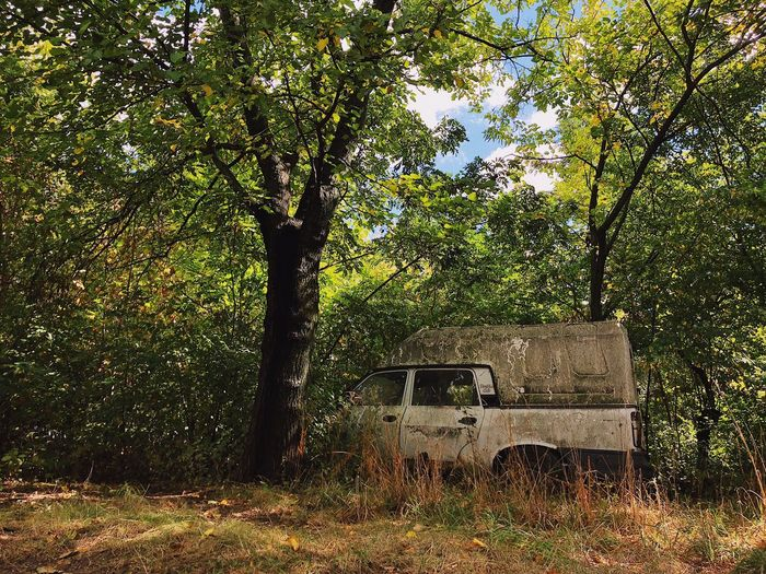 Forever forgotten 🚙... Rusty Education Experience Hiking ShotOnIphone Travel Tree Damage Environmental Issues Vintage Environment Pollution Retro Wreckage Wreck Abandoned Car Plant Tree Growth Nature No People Land Day Forest Tranquility Sunlight Branch Outdoors Green Color