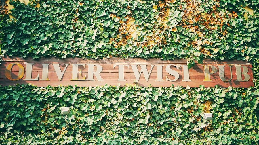Pub Western Script Text Communication Capital Letter Plant Ivy Day Leaf Green Color Outdoors Single Word Number Guidance Message Creeper Information Growth Welcome Sign Warning Signboard