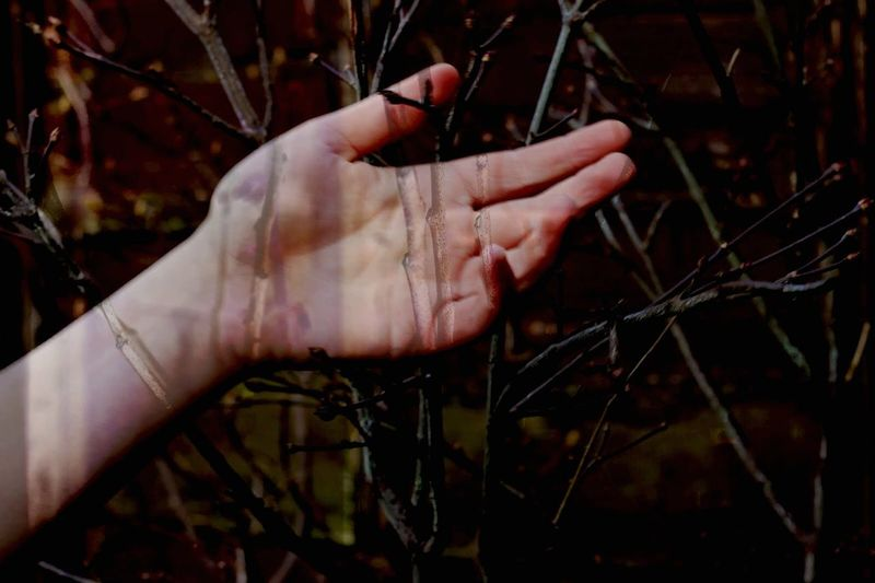 Digital Composite Image Of Woman Hand And Branches
