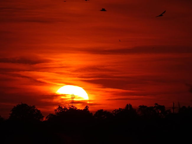 Sunset Silhouettes Sunset Birds Silhouette Shadows On The Sun Red Sky Orange Sky Clouds Sunset Colour Of Life Sunset_collection Colors And Patterns Colour Your Horizn