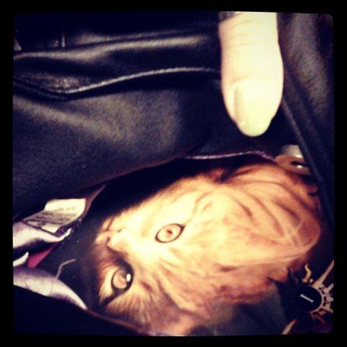 Ho un Gatto nella Borsa ! Ilsoledialur Alessandrofusco libro book cat