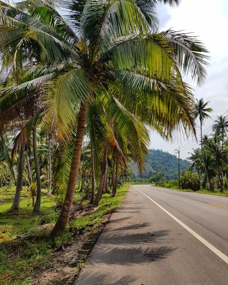 The green road in rural of Thailand Thailand Palm Tree Coconat Tree Road Rural Countryside Country Life Country Road Green High Way Way Tree The Way Forward Road Nature Day Outdoors Tranquility Beauty In Nature Scenics No People Growth Landscape Sky EyeEmNewHere An Eye For Travel