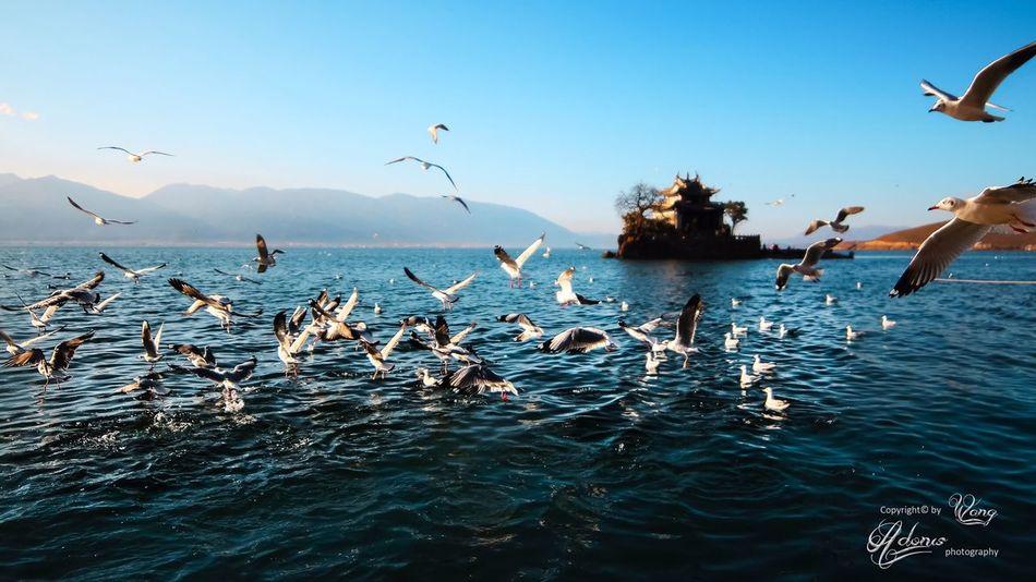 Landscape Birds Lake