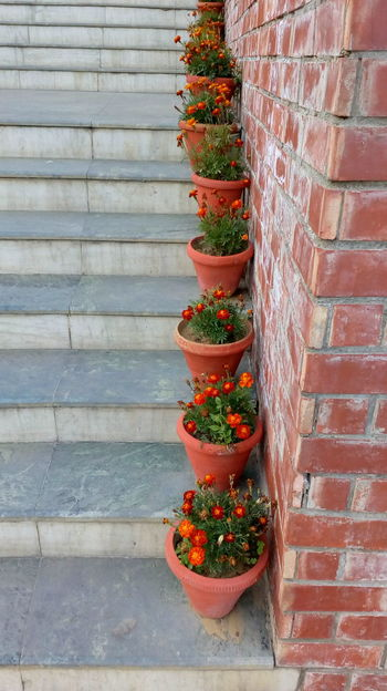 Stair And ArtMarigold Flower Bricks In A Row Outside Photography Pattern, Texture, Shape And Form Leaves🌿 Beautiful Nature Botony Pistil Green Green Green!  Blooming Orange Color Red Colors Freshness Growth Plant Yellow Color Marigold Beautiful Day